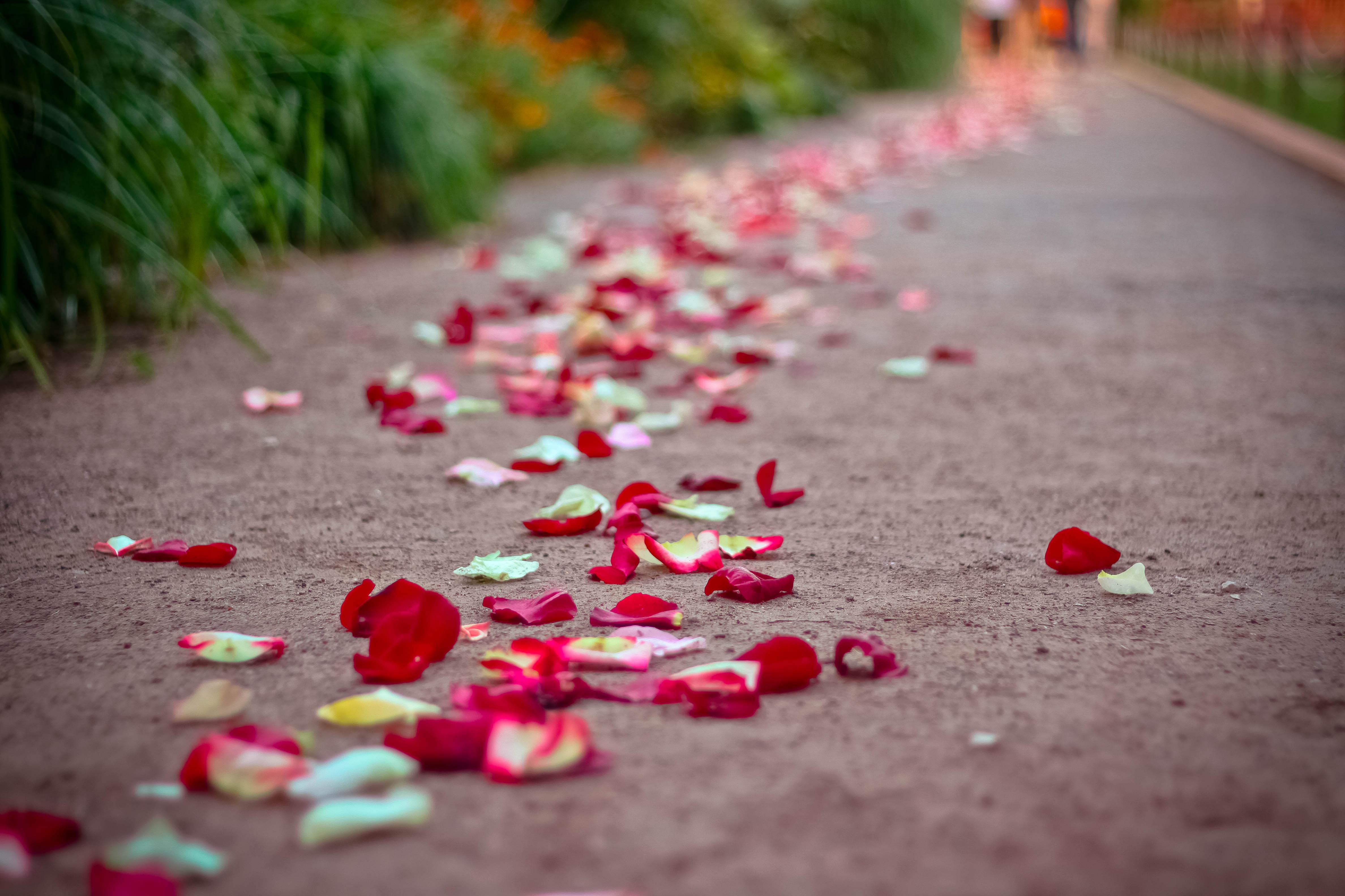 Дорожка из лепестков роз