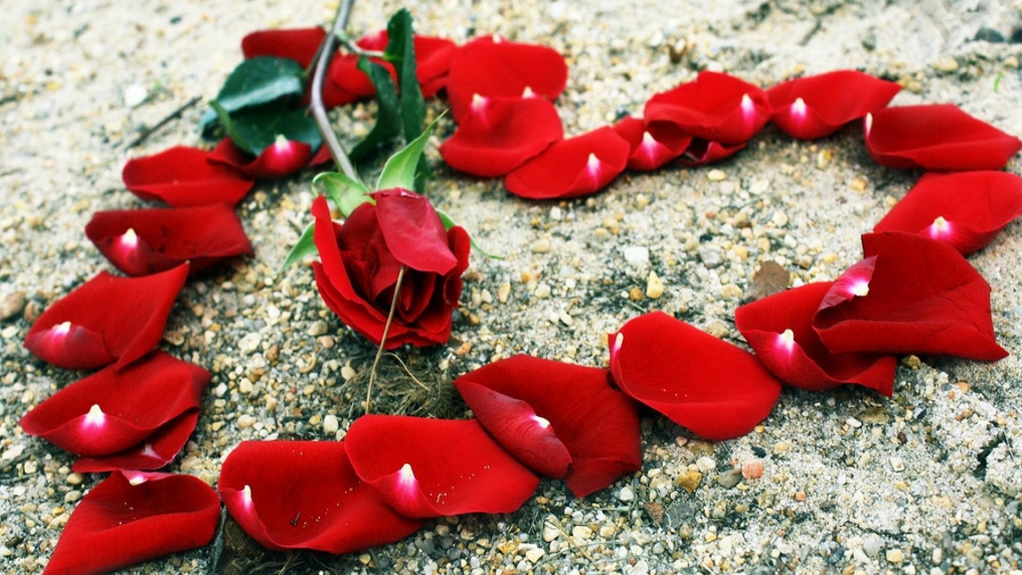 roza_lepestki_serdce_kamni_romantika_66803_2048x1152-1